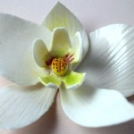 Gumpaste Moth Orchid
