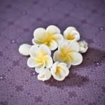Frangipani fondant flowers